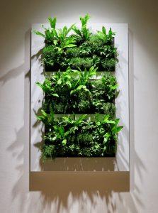 Wandbild mit echten Pflanzen